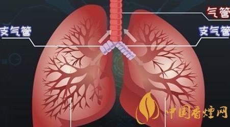吸烟的六个常见危害分析 戒烟已经刻不容缓