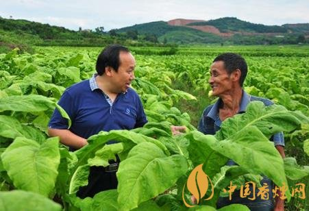 烟草种植收益怎么样 湖南烟户人均收入达8万元!