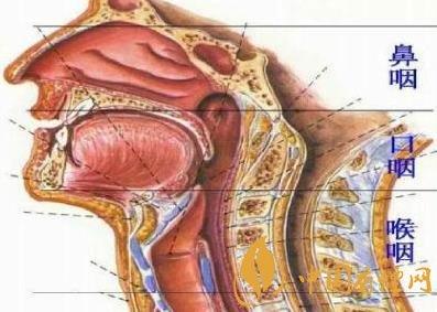 为什么吸烟可以导致咽喉癌 咽喉癌产生病因分析!